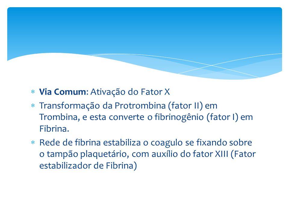 Via Comum: Ativação do Fator X Transformação da Protrombina (fator II) em Trombina, e esta converte o fibrinogênio (fator I) em Fibrina. Rede de fibri