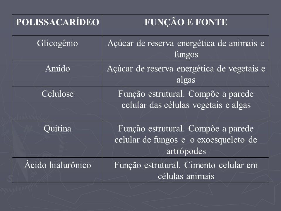 POLISSACARÍDEOFUNÇÃO E FONTE GlicogênioAçúcar de reserva energética de animais e fungos AmidoAçúcar de reserva energética de vegetais e algas Celulose