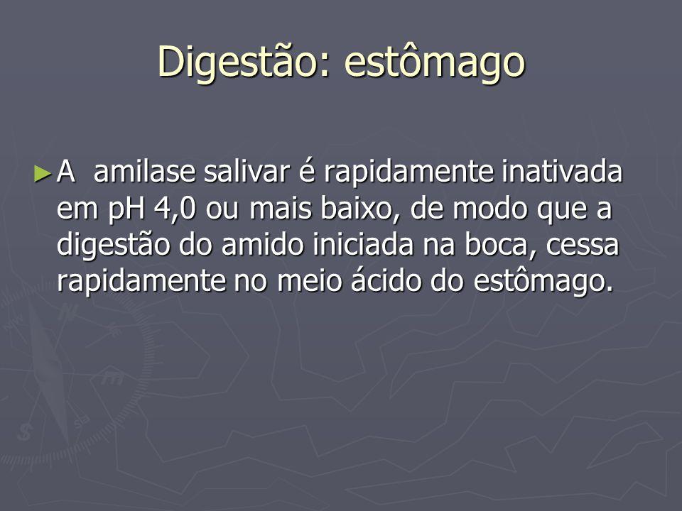 Digestão: estômago A amilase salivar é rapidamente inativada em pH 4,0 ou mais baixo, de modo que a digestão do amido iniciada na boca, cessa rapidame