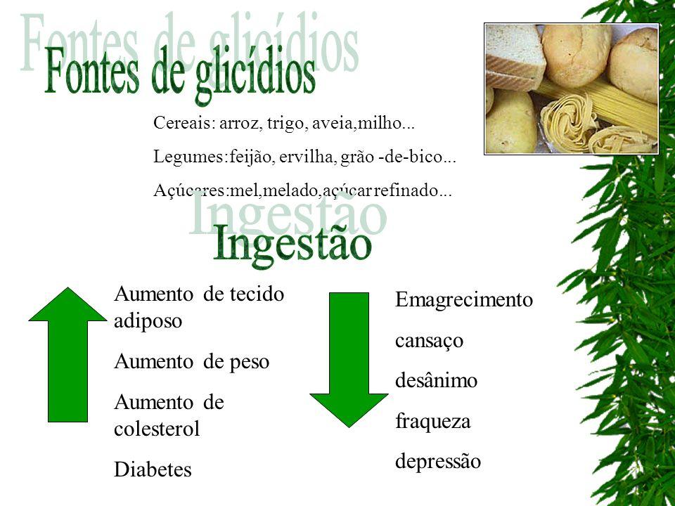 Cereais: arroz, trigo, aveia,milho... Legumes:feijão, ervilha, grão -de-bico... Açúcares:mel,melado,açúcar refinado... Aumento de tecido adiposo Aumen
