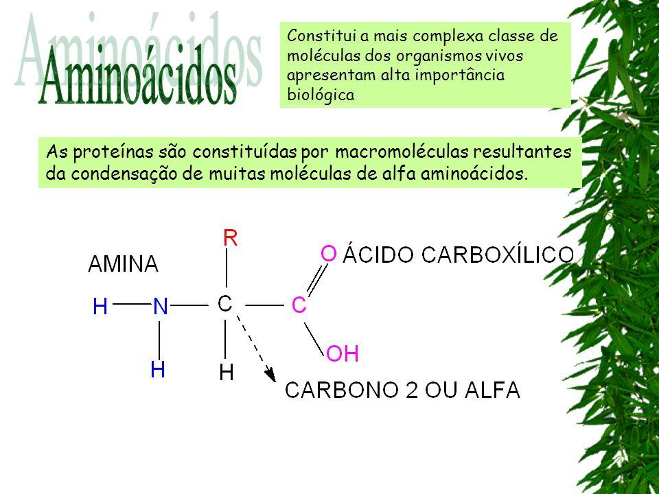 As proteínas são constituídas por macromoléculas resultantes da condensação de muitas moléculas de alfa aminoácidos. Constitui a mais complexa classe