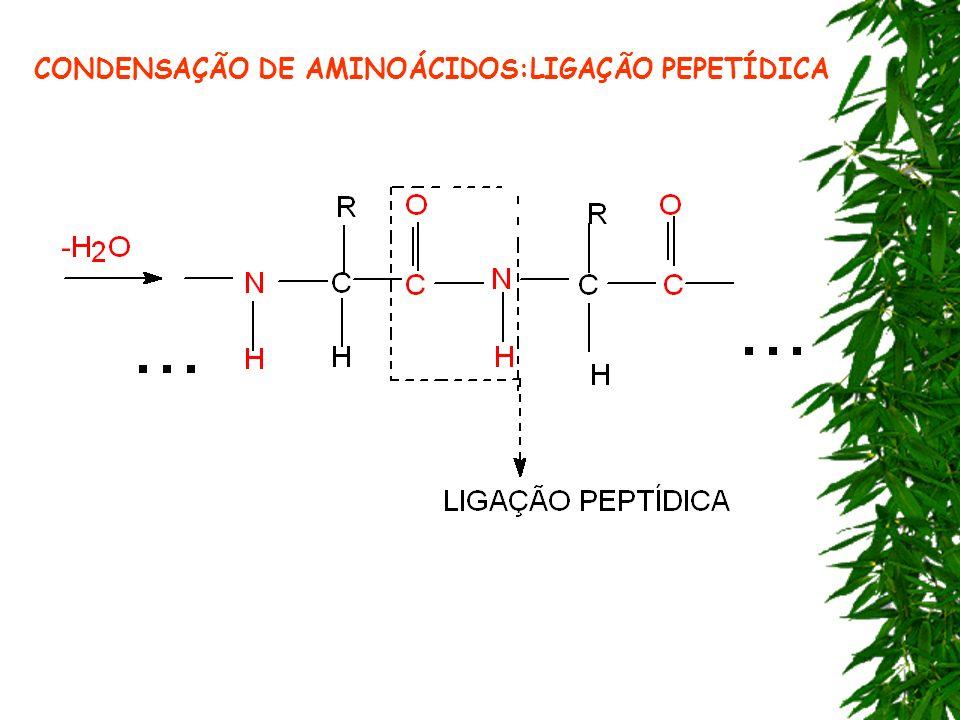 CONDENSAÇÃO DE AMINOÁCIDOS:LIGAÇÃO PEPETÍDICA