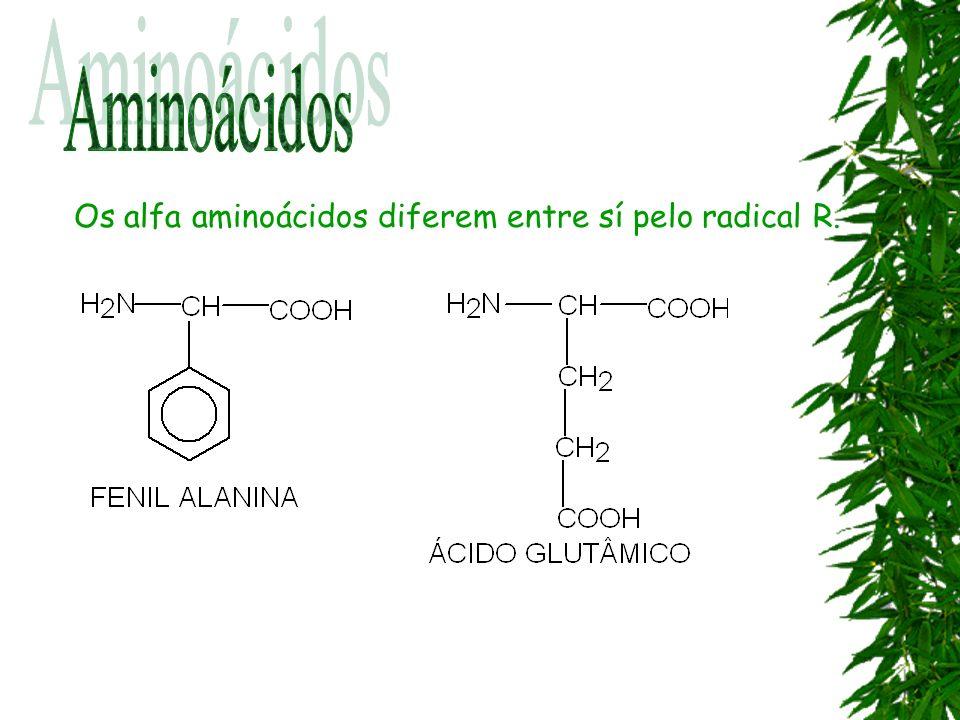 Os alfa aminoácidos diferem entre sí pelo radical R.