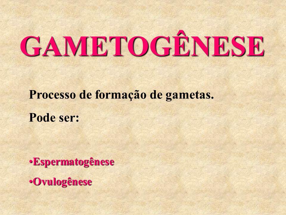GAMETOGÊNESE GAMETOGÊNESE Processo de formação de gametas. Pode ser: EspermatogêneseEspermatogênese OvulogêneseOvulogênese