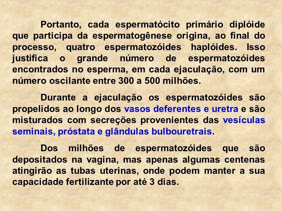 ESPERMATOZÓIDE Capacitação: etapa final da maturação do espermatozóide.