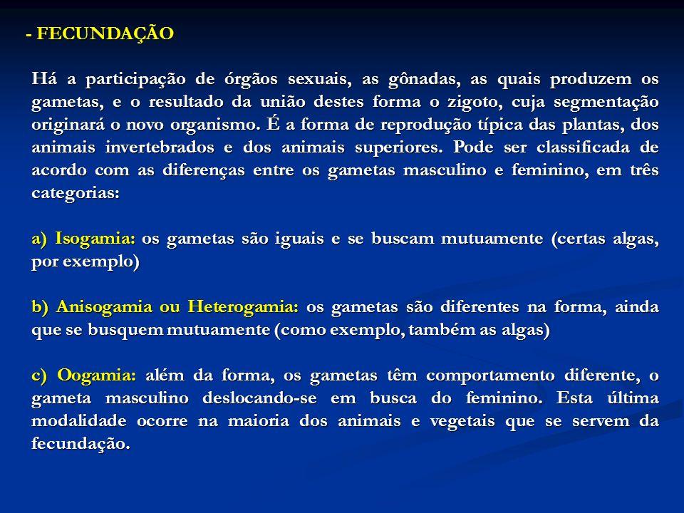 - FECUNDAÇÃO Há a participação de órgãos sexuais, as gônadas, as quais produzem os gametas, e o resultado da união destes forma o zigoto, cuja segment