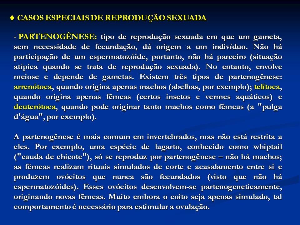 CASOS ESPECIAIS DE REPRODUÇÃO SEXUADA CASOS ESPECIAIS DE REPRODUÇÃO SEXUADA - PARTENOGÊNESE: tipo de reprodução sexuada em que um gameta, sem necessid