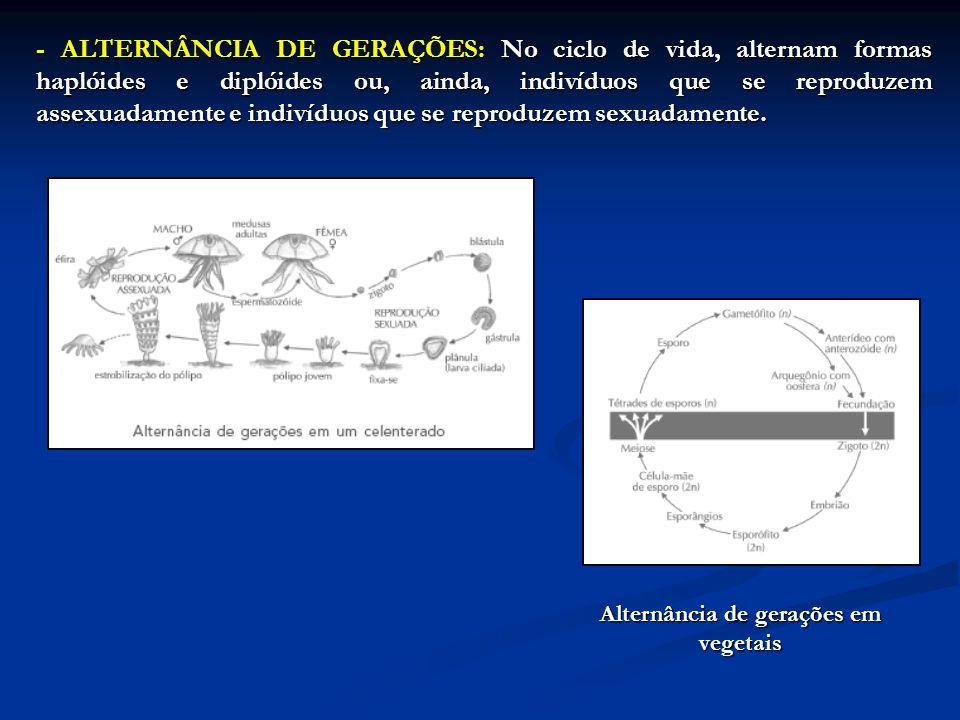 - ALTERNÂNCIA DE GERAÇÕES: No ciclo de vida, alternam formas haplóides e diplóides ou, ainda, indivíduos que se reproduzem assexuadamente e indivíduos