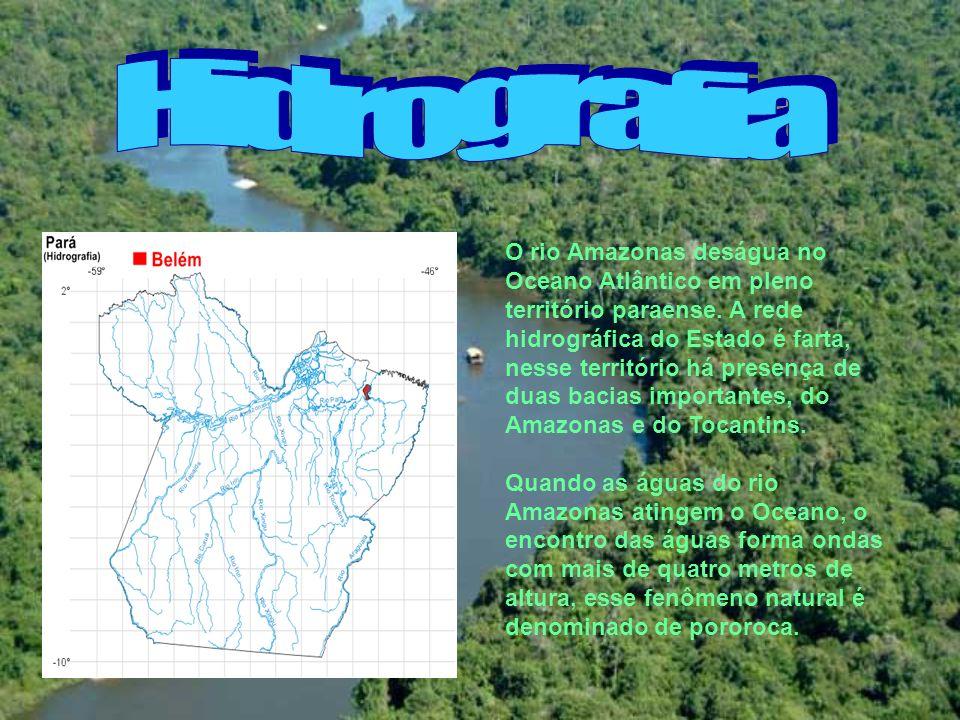 O rio Amazonas deságua no Oceano Atlântico em pleno território paraense. A rede hidrográfica do Estado é farta, nesse território há presença de duas b