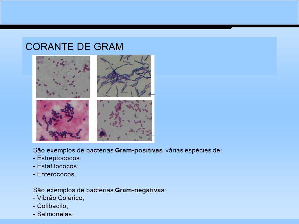 CORANTE DE GRAM São exemplos de bactérias Gram-positivas várias espécies de: - Estreptococos; - Estafilococos; - Enterococos. São exemplos de bactéria