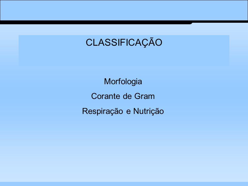CLASSIFICAÇÃO Morfologia Corante de Gram Respiração e Nutrição