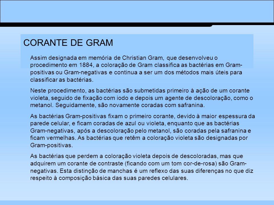 CORANTE DE GRAM Assim designada em memória de Christian Gram, que desenvolveu o procedimento em 1884, a coloração de Gram classifica as bactérias em Gram- positivas ou Gram-negativas e continua a ser um dos métodos mais úteis para classificar as bactérias.