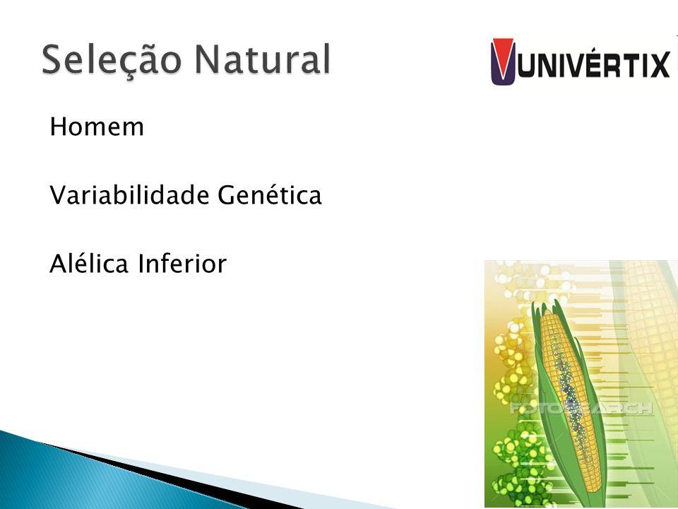 Homem Variabilidade Genética Alélica Inferior