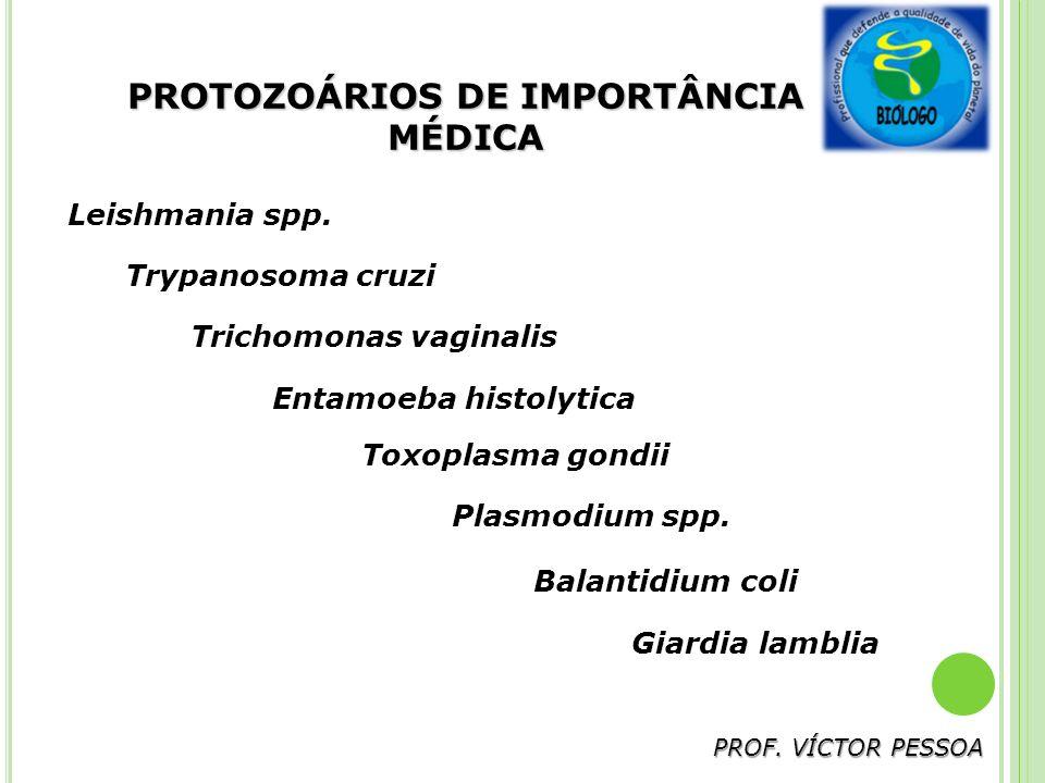 PROTOZOÁRIOS DE IMPORTÂNCIA MÉDICA PROF.VÍCTOR PESSOA Leishmania spp.