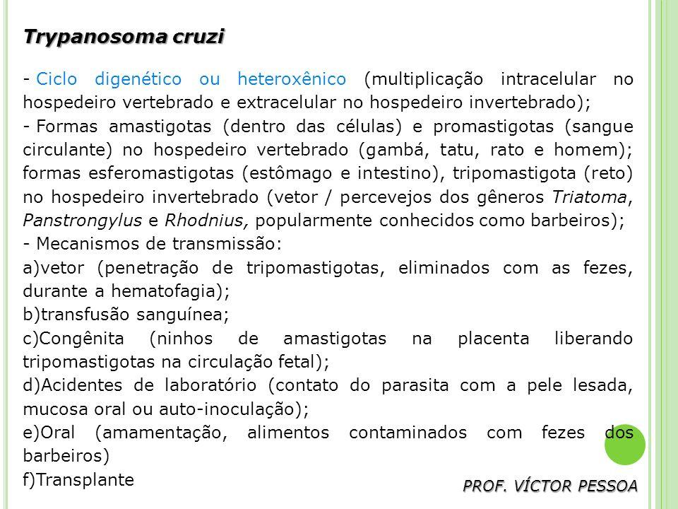 Trypanosoma cruzi - Ciclo digenético ou heteroxênico (multiplicação intracelular no hospedeiro vertebrado e extracelular no hospedeiro invertebrado); - Formas amastigotas (dentro das células) e promastigotas (sangue circulante) no hospedeiro vertebrado (gambá, tatu, rato e homem); formas esferomastigotas (estômago e intestino), tripomastigota (reto) no hospedeiro invertebrado (vetor / percevejos dos gêneros Triatoma, Panstrongylus e Rhodnius, popularmente conhecidos como barbeiros); - Mecanismos de transmissão: a)vetor (penetração de tripomastigotas, eliminados com as fezes, durante a hematofagia); b)transfusão sanguínea; c)Congênita (ninhos de amastigotas na placenta liberando tripomastigotas na circulação fetal); d)Acidentes de laboratório (contato do parasita com a pele lesada, mucosa oral ou auto-inoculação); e)Oral (amamentação, alimentos contaminados com fezes dos barbeiros) f)Transplante PROF.