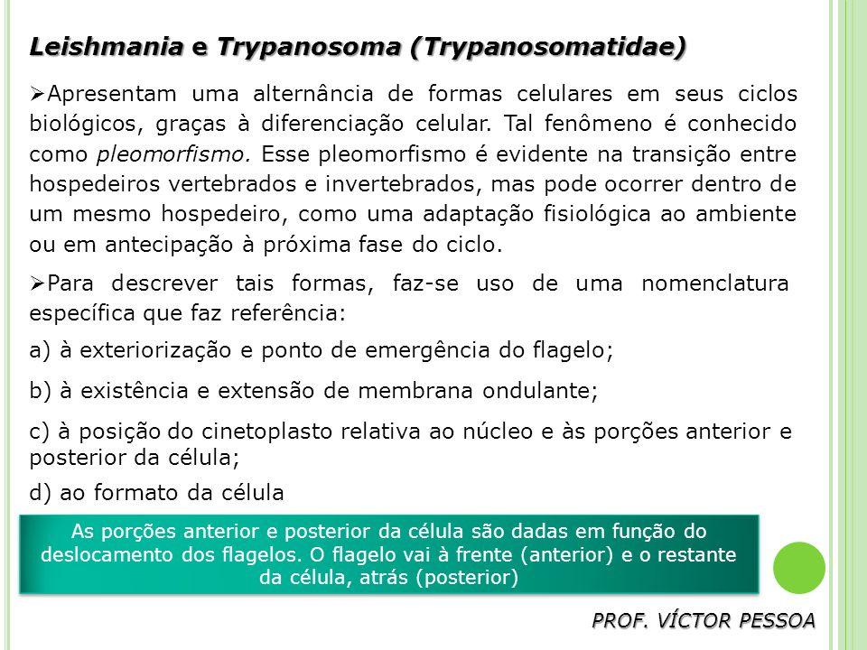 Leishmania e Trypanosoma (Trypanosomatidae) Apresentam uma alternância de formas celulares em seus ciclos biológicos, graças à diferenciação celular.