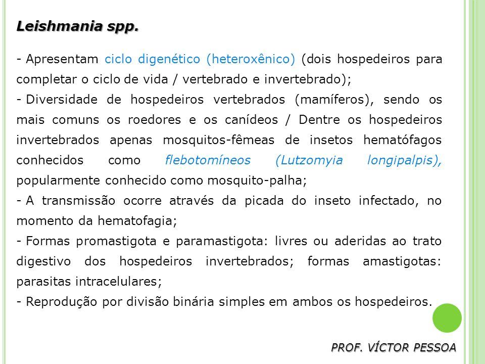 Trichomonas vaginalis PROF.