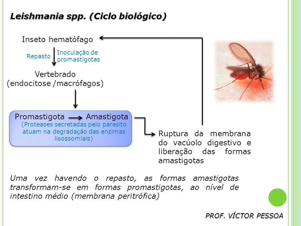 Ciclo biológico do gênero Leishmania