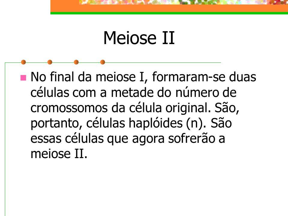 Meiose II No final da meiose I, formaram-se duas células com a metade do número de cromossomos da célula original. São, portanto, células haplóides (n