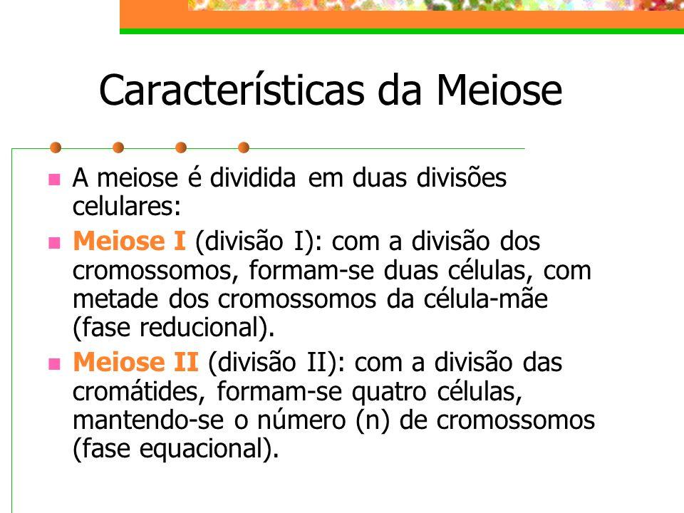 Características da Meiose A meiose é dividida em duas divisões celulares: Meiose I (divisão I): com a divisão dos cromossomos, formam-se duas células,