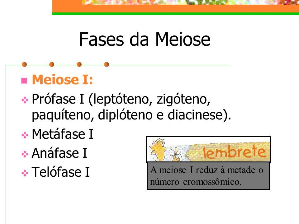 Fases da Meiose Meiose I: Prófase I (leptóteno, zigóteno, paquíteno, diplóteno e diacinese). Metáfase I Anáfase I Telófase I A meiose I reduz à metade
