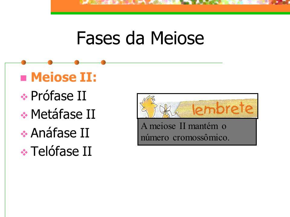 Fases da Meiose Meiose II: Prófase II Metáfase II Anáfase II Telófase II A meiose II mantém o número cromossômico.