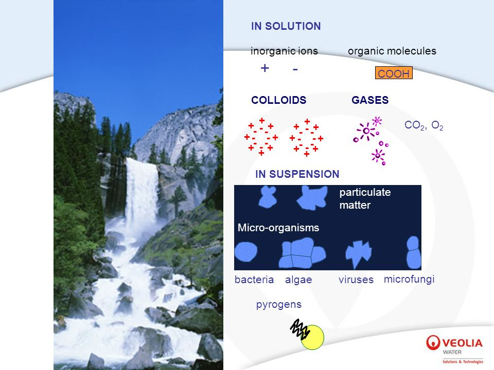 bacteria IN SUSPENSION algaeviruses microfungi COLLOIDS IN SOLUTION organic moleculesinorganic ions +- + + + + + + + + + + + + + + + + - - - - - - --