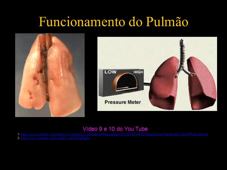 Funcionamento do Pulmão Vídeo 9 e 10 do You Tube 1- http://www.youtube.com/watch?v=x5oJ9nOY0_c&feature=PlayList&p=A731307281AE12A7&playnext=1&playnext