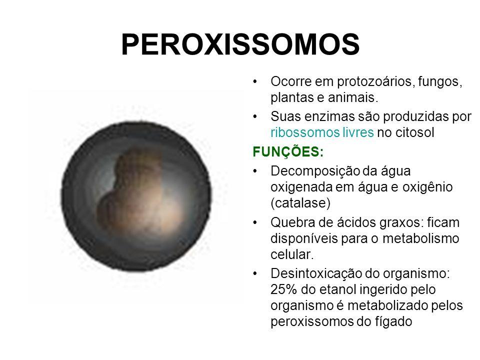 PEROXISSOMOS Ocorre em protozoários, fungos, plantas e animais. Suas enzimas são produzidas por ribossomos livres no citosol FUNÇÕES: Decomposição da
