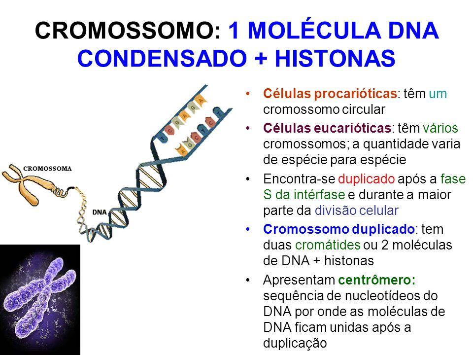 CROMOSSOMO: 1 MOLÉCULA DNA CONDENSADO + HISTONAS Células procarióticas: têm um cromossomo circular Células eucarióticas: têm vários cromossomos; a qua