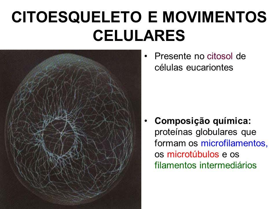 CITOESQUELETO E MOVIMENTOS CELULARES Presente no citosol de células eucariontes Composição química: proteínas globulares que formam os microfilamentos