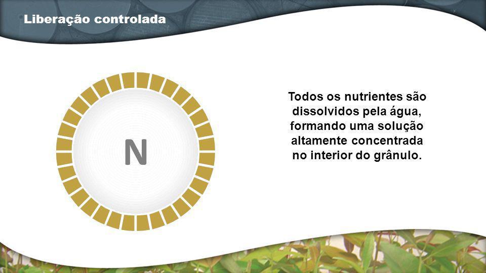 Todos os nutrientes são dissolvidos pela água, formando uma solução altamente concentrada no interior do grânulo. Liberação controlada N