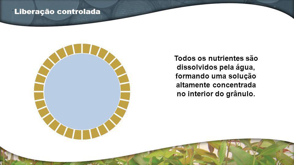 Todos os nutrientes são dissolvidos pela água, formando uma solução altamente concentrada no interior do grânulo. Liberação controlada