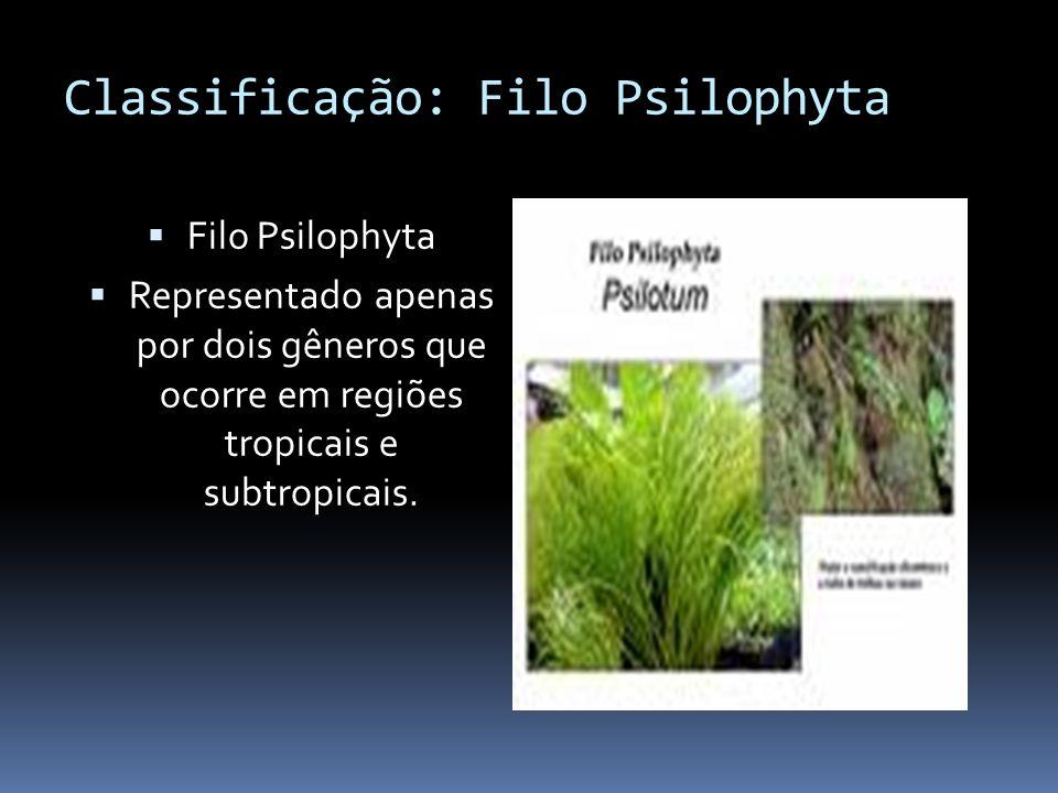 Classificação: Filo Psilophyta Filo Psilophyta Representado apenas por dois gêneros que ocorre em regiões tropicais e subtropicais.