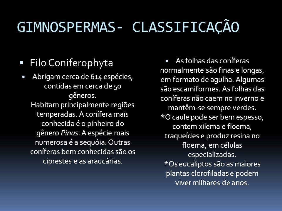 GIMNOSPERMAS- CLASSIFICAÇÃO Filo Coniferophyta Abrigam cerca de 614 espécies, contidas em cerca de 50 gêneros. Habitam principalmente regiões temperad