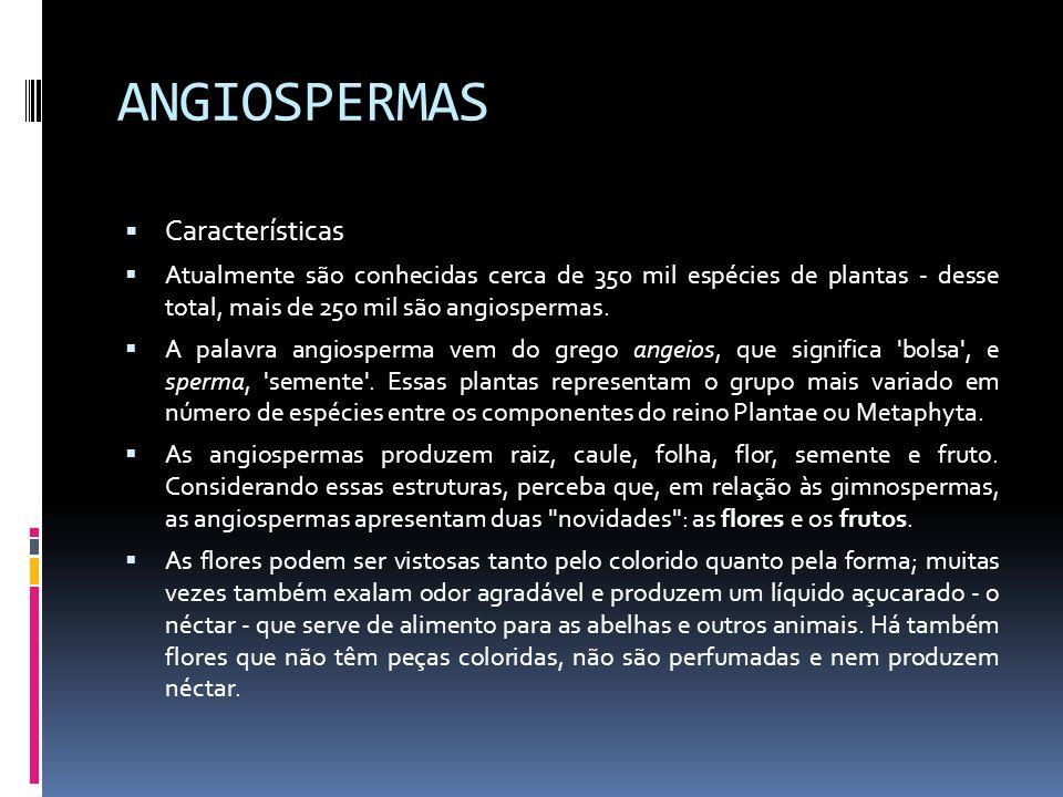 ANGIOSPERMAS Características Atualmente são conhecidas cerca de 350 mil espécies de plantas - desse total, mais de 250 mil são angiospermas. A palavra