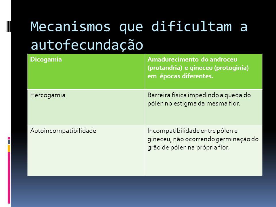 Mecanismos que dificultam a autofecundação DicogamiaAmadurecimento do androceu (protandria) e gineceu (protoginia) em épocas diferentes. HercogamiaBar