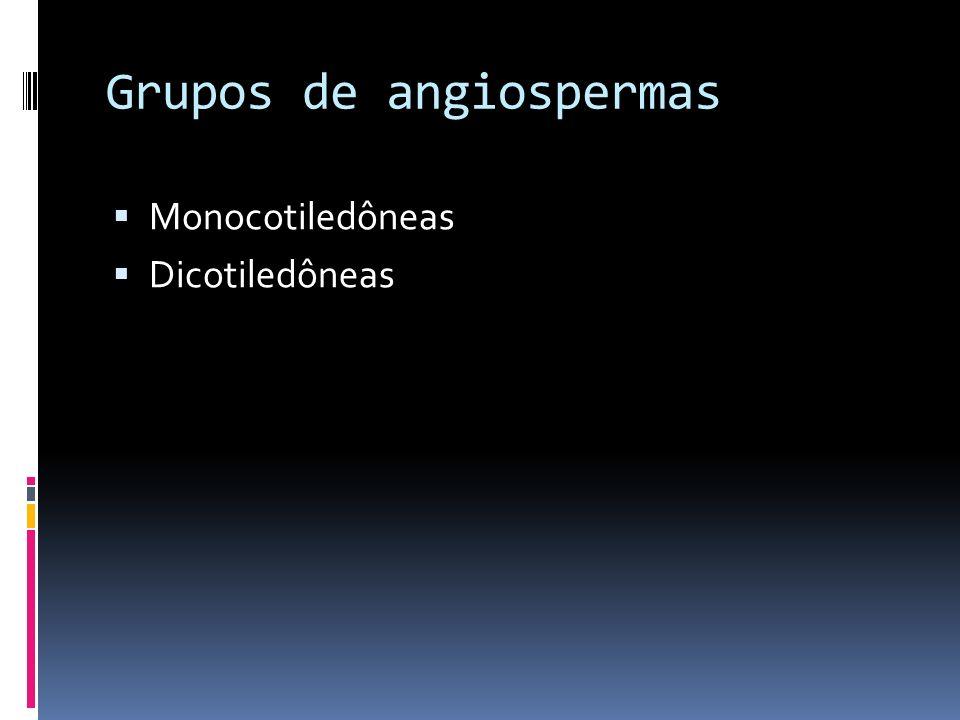 Grupos de angiospermas Monocotiledôneas Dicotiledôneas