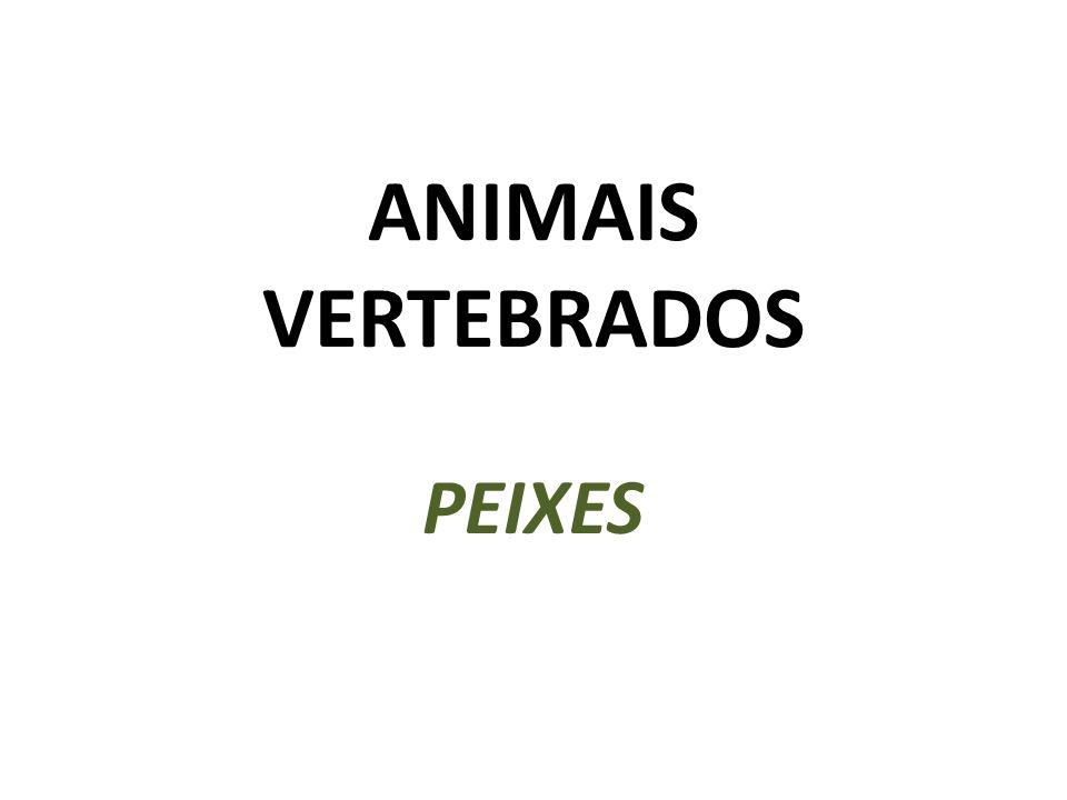 ANIMAIS VERTEBRADOS PEIXES