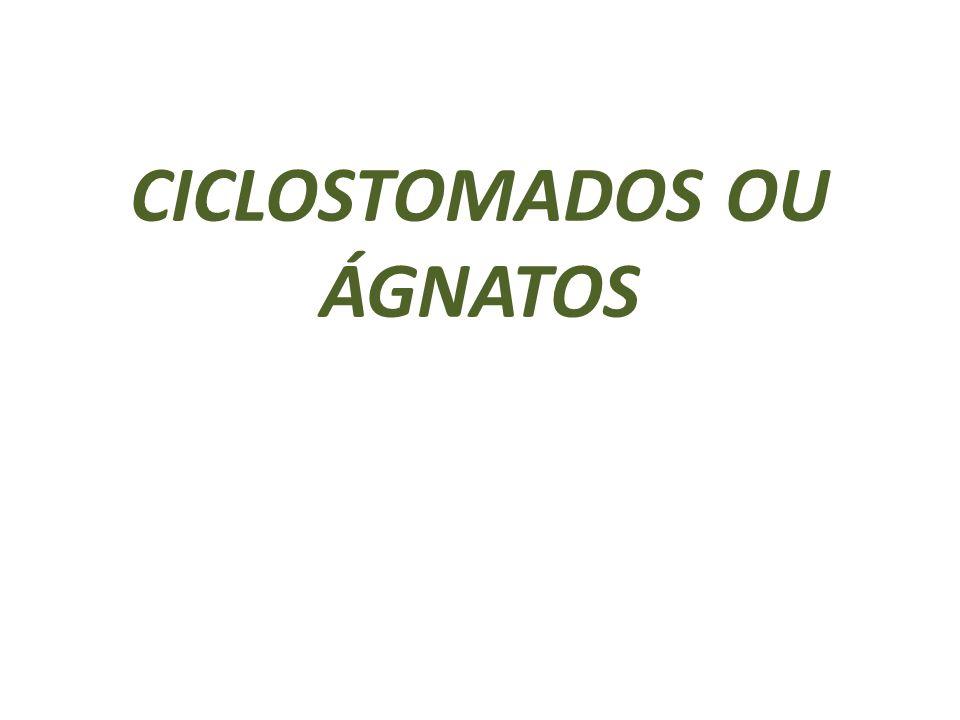 CICLOSTOMADOS OU ÁGNATOS