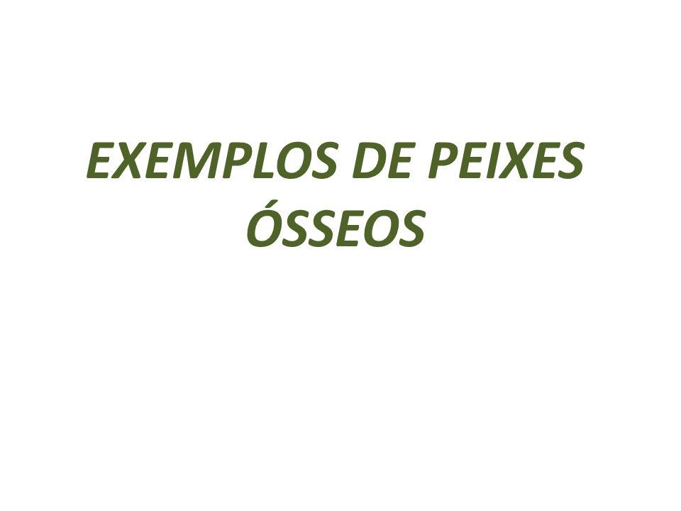 EXEMPLOS DE PEIXES ÓSSEOS