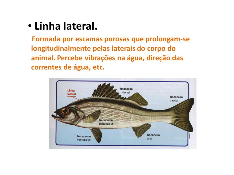 Linha lateral.