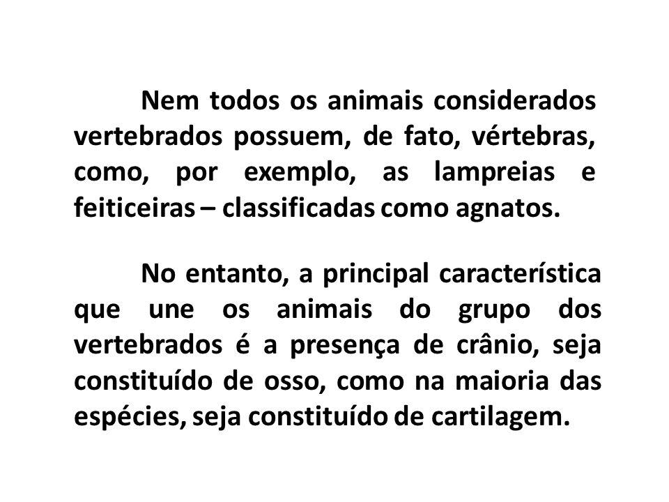 Nem todos os animais considerados vertebrados possuem, de fato, vértebras, como, por exemplo, as lampreias e feiticeiras – classificadas como agnatos.