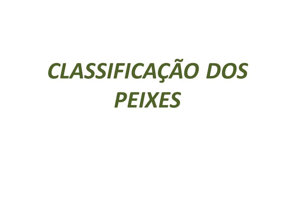 CLASSIFICAÇÃO DOS PEIXES
