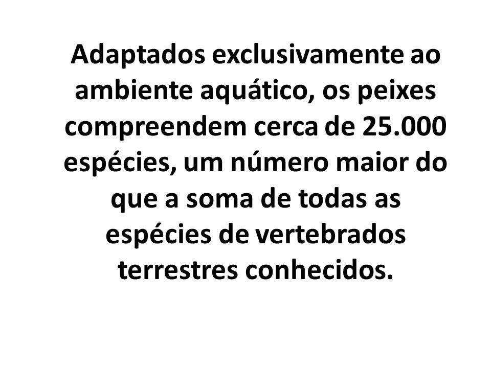 TUBARÃO BRANCO ARRAIA QUIMERA
