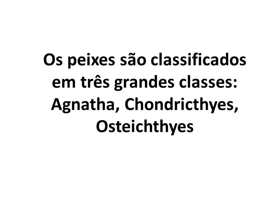 Os peixes são classificados em três grandes classes: Agnatha, Chondricthyes, Osteichthyes