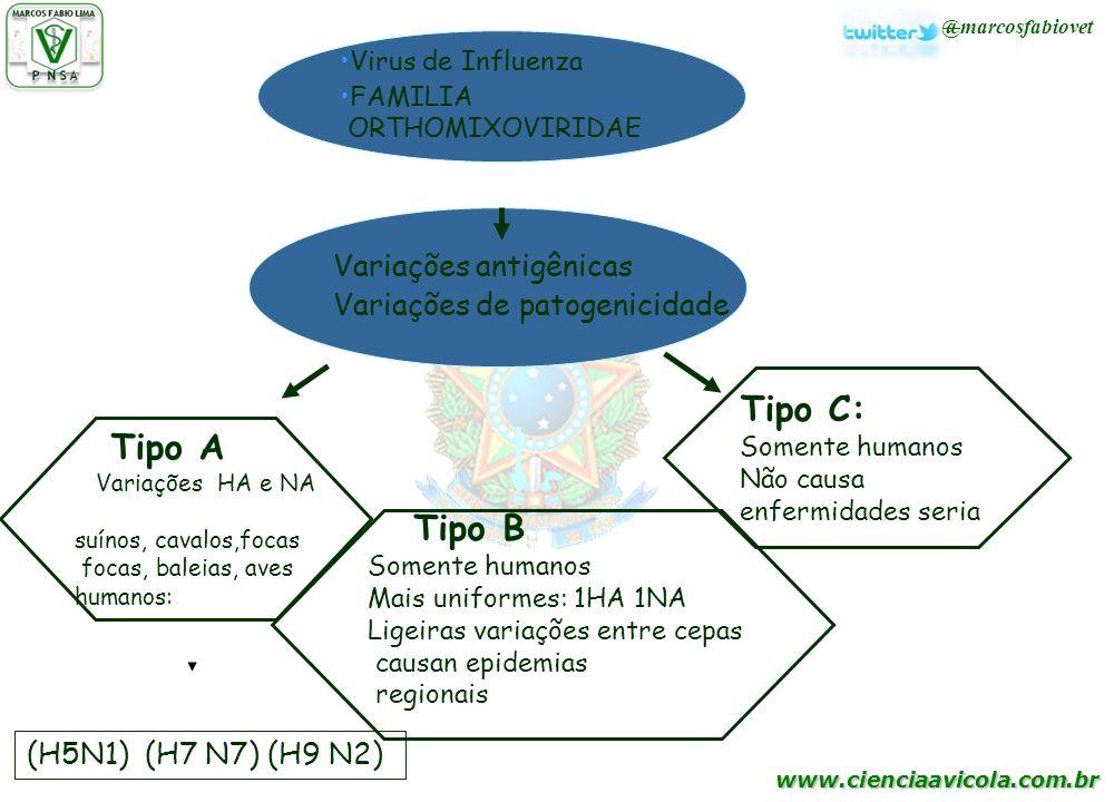 www.cienciaavicola.com.br Variações antigênicas Variações de patogenicidade Virus de Influenza FAMILIA ORTHOMIXOVIRIDAE Tipo A Variações HA e NA suíno
