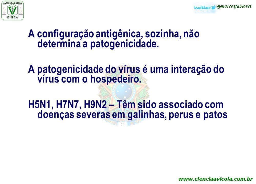 www.cienciaavicola.com.br @marcosfabiovet A configuração antigênica, sozinha, não determina a patogenicidade. A patogenicidade do vírus é uma interaçã