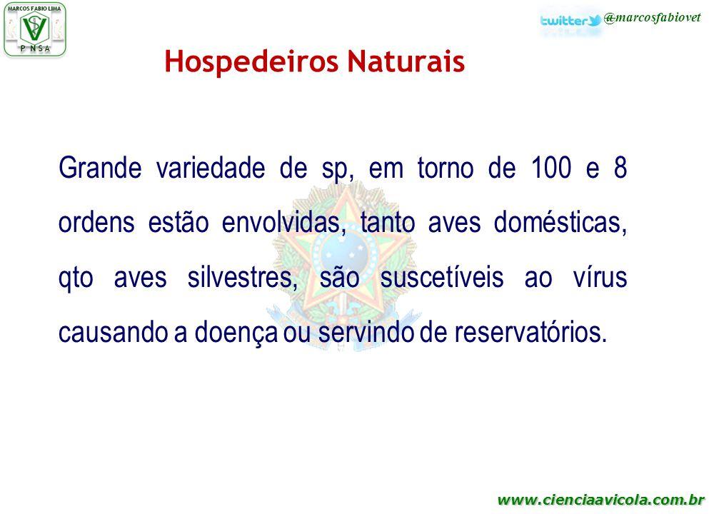 www.cienciaavicola.com.br @marcosfabiovet Hospedeiros Naturais Grande variedade de sp, em torno de 100 e 8 ordens estão envolvidas, tanto aves domésti