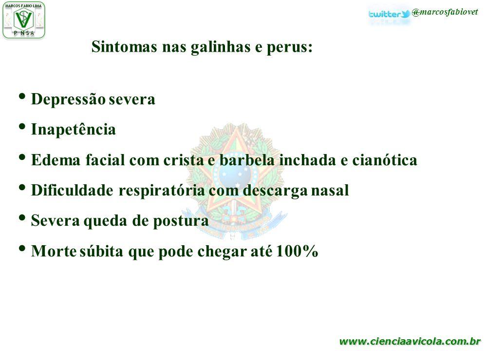 www.cienciaavicola.com.br @marcosfabiovet Sintomas nas galinhas e perus: Depressão severa Inapetência Edema facial com crista e barbela inchada e cian